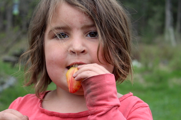 Child eating edible tulip flowers