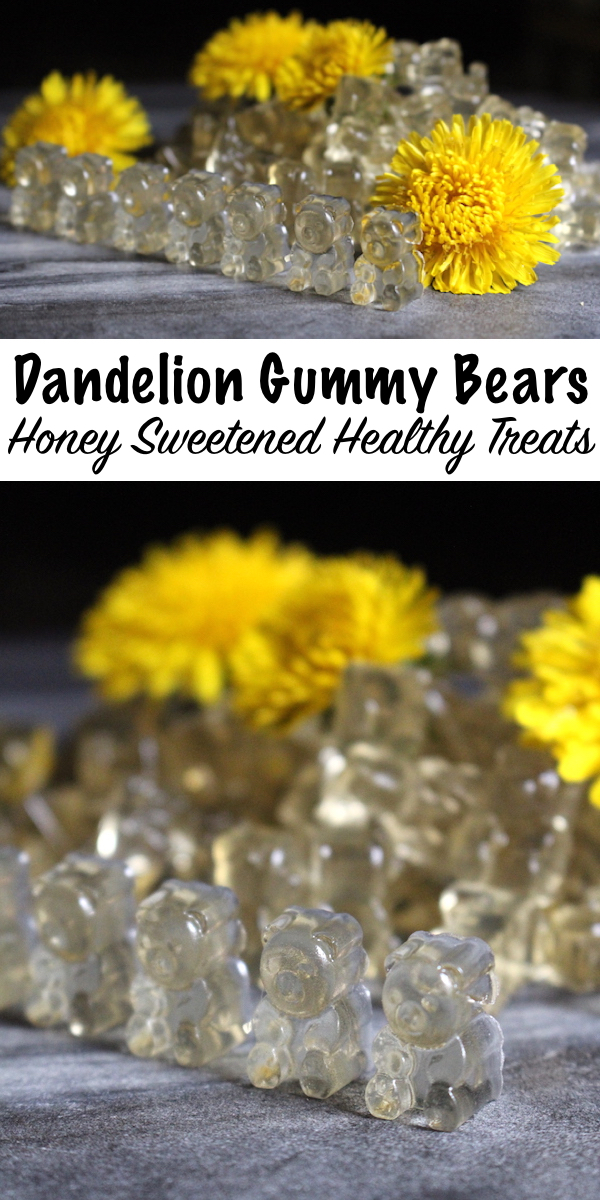 Dandelion and Honey Gummy Bears Recipe ~ This wild foraged gummy bears recipe will get your little ones excited. They can participate in every part of the process, and this healthy gummy bears recipe only has three simple ingredients. Just another fun dandelion recipe to bring a bit more wild foraged treats into the kitchen. ~ Homemade Gummy Bears Recipe with Dandelion flowers and honey