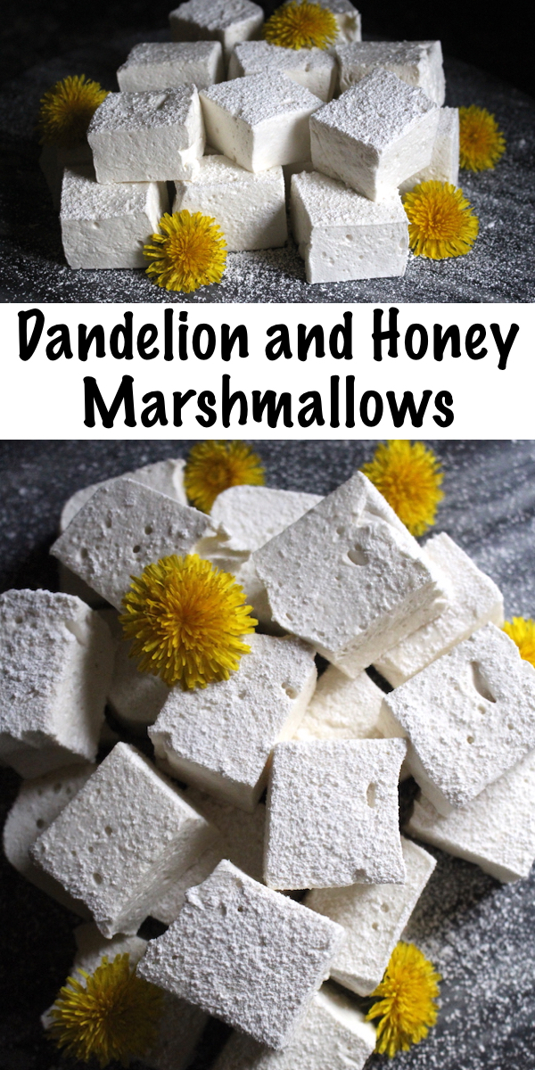 Dandelion and Honey Marshmallows ~ These homemade marshmallows are made without corn syrup and flavored with dandelion petals for a unique herbal treat. The kids will love this honey flavored wild foraged treat!