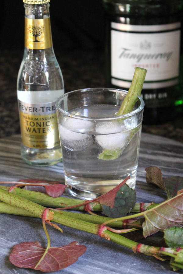 Japanese Knotweed Gin and Tonic