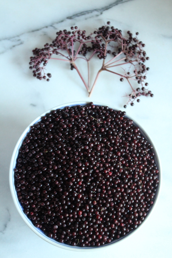 Bowl of fresh elderberries with stems removed to prepare them for pie